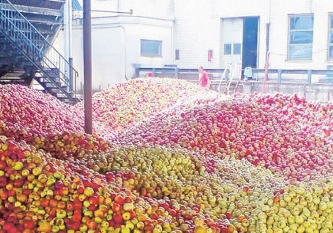 La Russia importa dalla Serbia frutta e frutti di bosco ma non vi sono grandi investimenti diretti in attività di trasformazione agroalimentare.